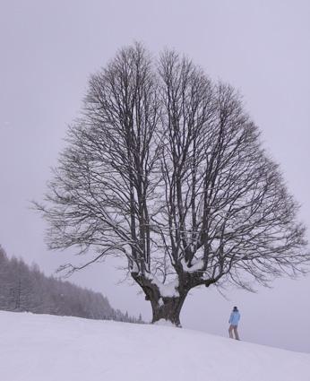 杉の原スキー場2.jpg
