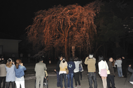 桜2.jpg