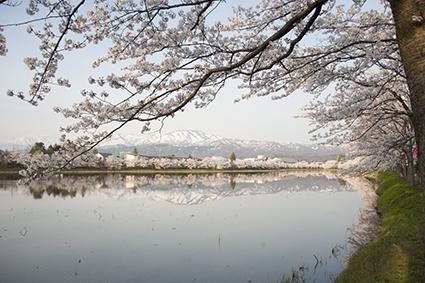 桜と難波山.jpg