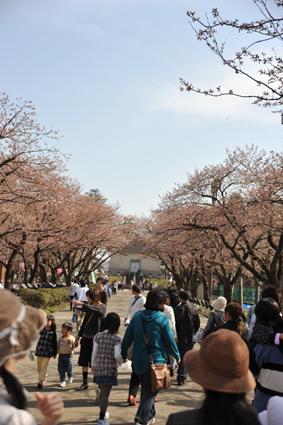 10桜.jpg