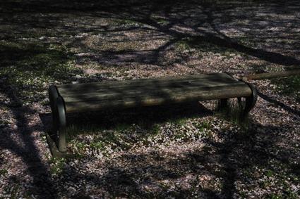 散り桜とベンチ.jpg