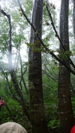 樹幹流.jpg